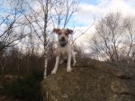 Ocho på tur i skogen
